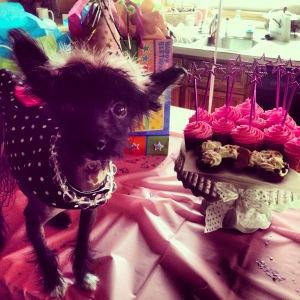 Pandora birthday 1