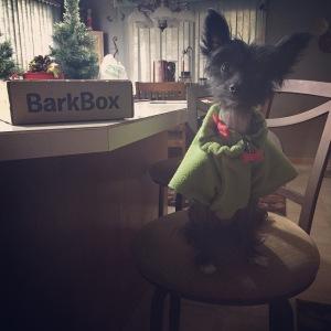 BarkBox 1