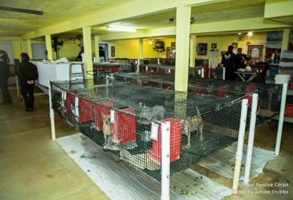 Puppy Mill 1