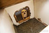 Puppy Mill 4