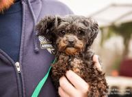 puppy mill 5